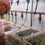 Gianni Brundu e ricci di mare