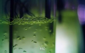 fondazione-imc-laboratorio-microalghe-02