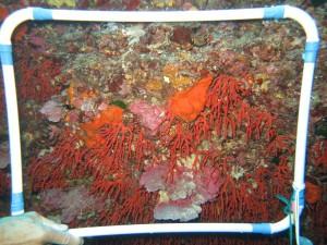 fondazione-imc-corallo
