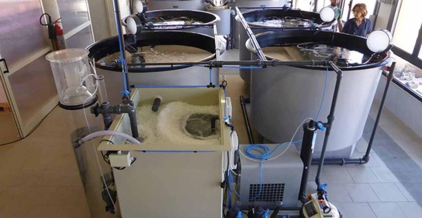 vasche laboratorio avannotteria della fondazione IMC a Oristano n Sardegna
