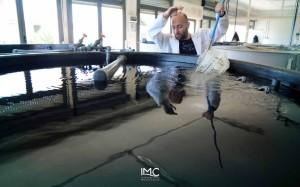 fondazione-imc-laboratorio-acquacoltura-avannotteria-attività-produttive-18
