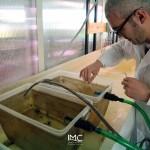 fondazione-imc-laboratorio-acquacoltura-invertebrati-bentonici-attività-produttive-11