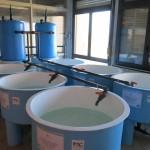 fondazione-imc-laboratorio-acquacoltura-invertebrati-bentonici-attività-produttive-12