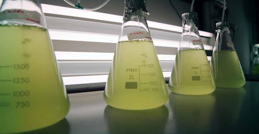 laboratorio microalghe
