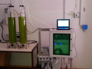 fotobioreattori microalghe