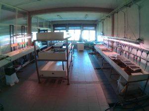 laboratorio imc